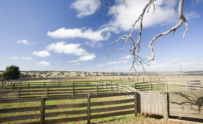 Empty cattle yards